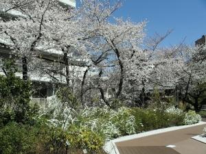 神田明神屋上庭園