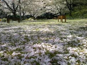 花びらのじゅうたん